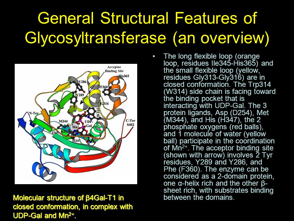 General Structural Features of Glycosyltransferase (an overview)