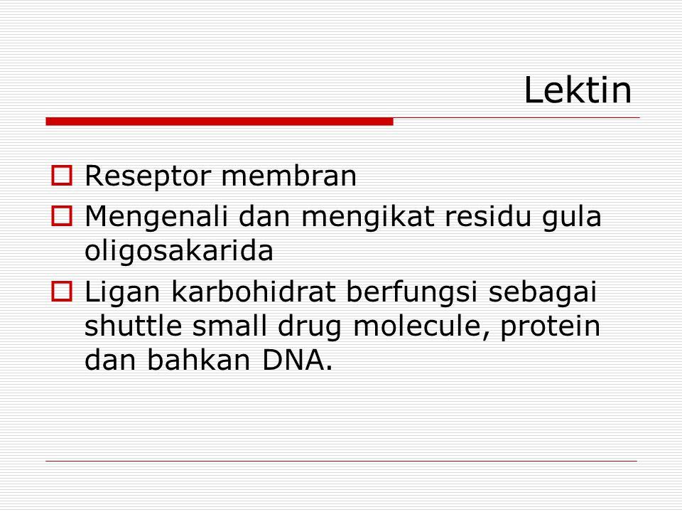 Lektin Reseptor membran
