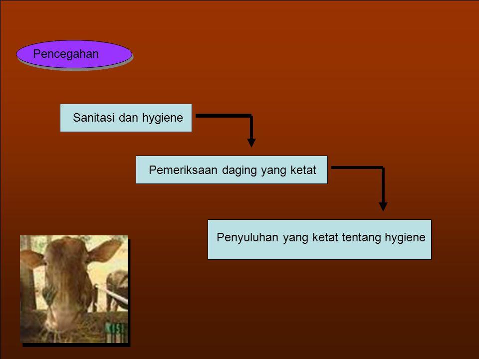 Pencegahan Sanitasi dan hygiene Pemeriksaan daging yang ketat Penyuluhan yang ketat tentang hygiene