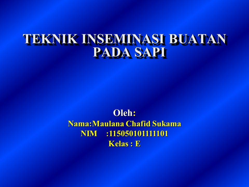 TEKNIK INSEMINASI BUATAN PADA SAPI Nama:Maulana Chafid Sukama