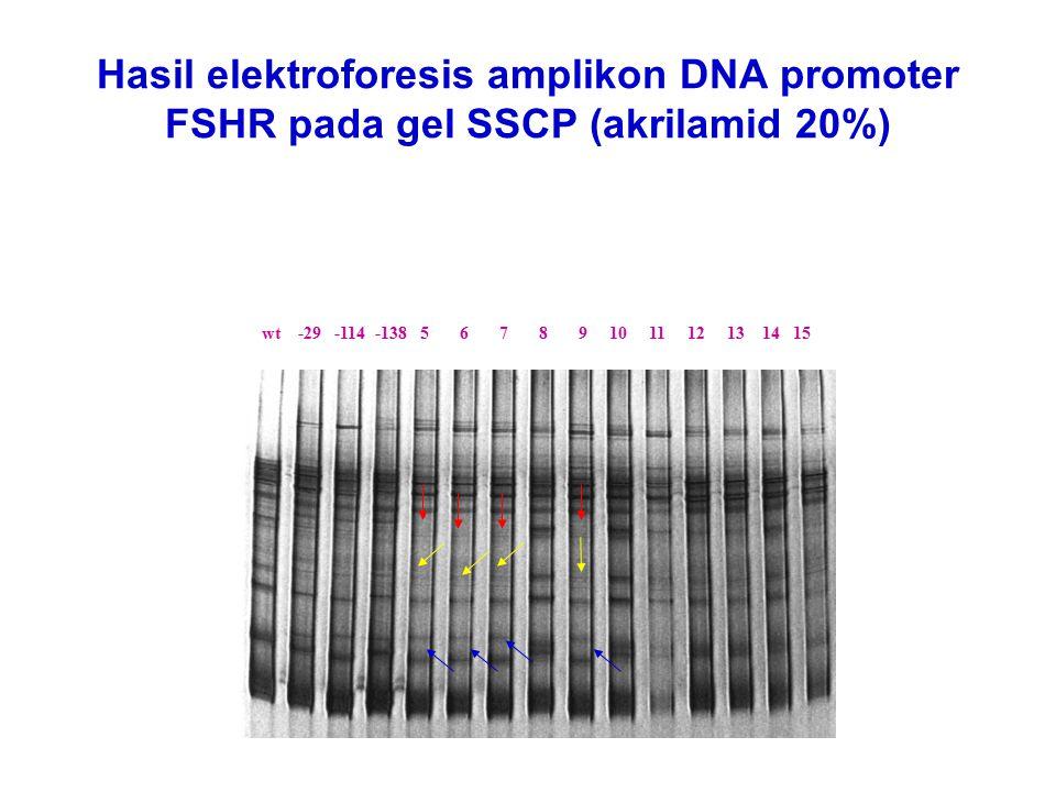 Hasil elektroforesis amplikon DNA promoter FSHR pada gel SSCP (akrilamid 20%)