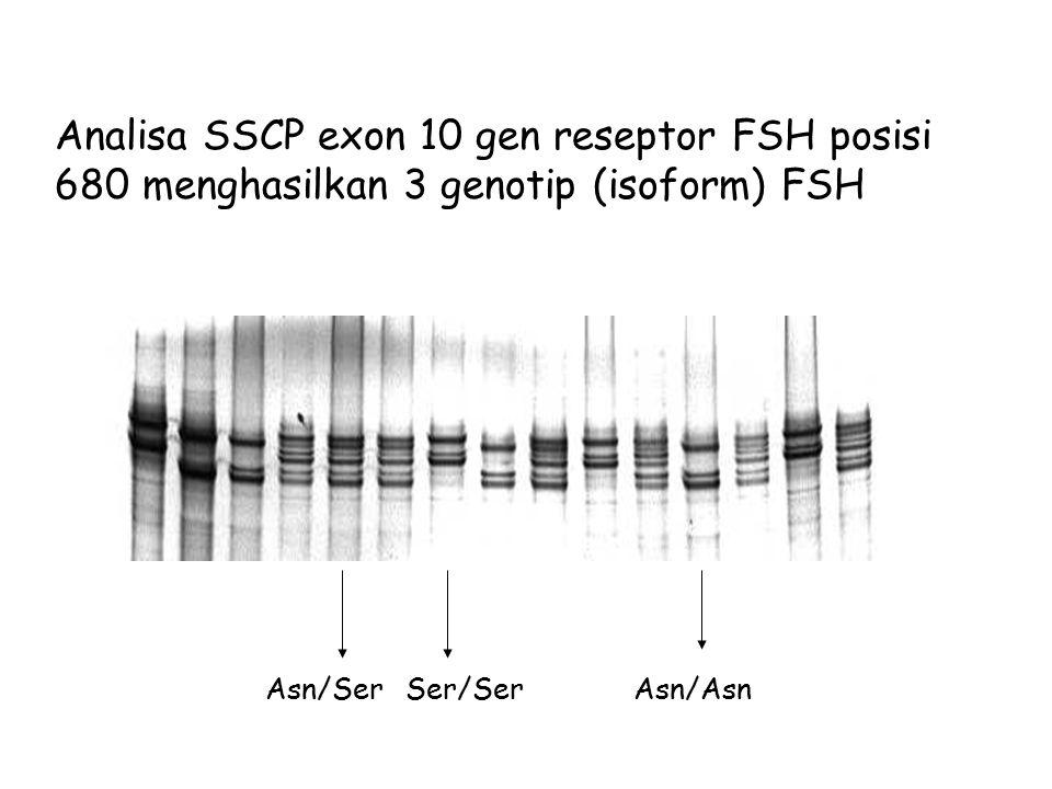 Analisa SSCP exon 10 gen reseptor FSH posisi 680 menghasilkan 3 genotip (isoform) FSH. Asn/Ser. Ser/Ser.