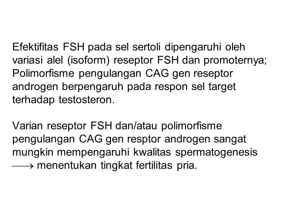 Efektifitas FSH pada sel sertoli dipengaruhi oleh variasi alel (isoform) reseptor FSH dan promoternya; Polimorfisme pengulangan CAG gen reseptor androgen berpengaruh pada respon sel target terhadap testosteron.