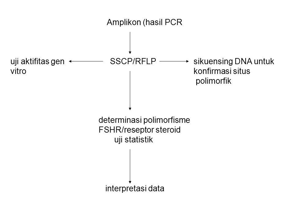 Amplikon (hasil PCR uji aktifitas gen. SSCP/RFLP