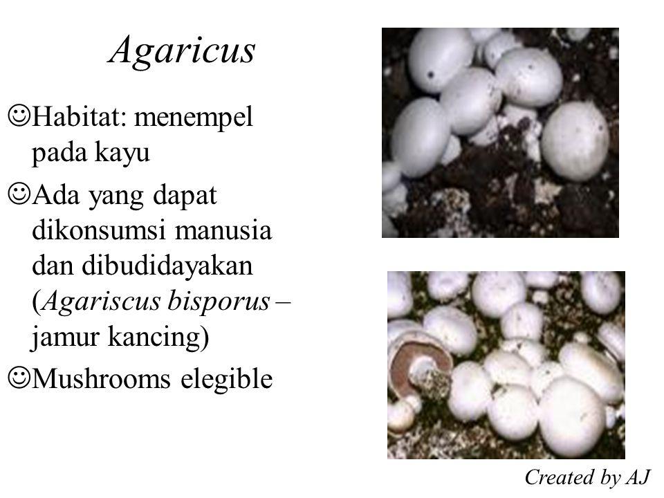 Agaricus Habitat: menempel pada kayu