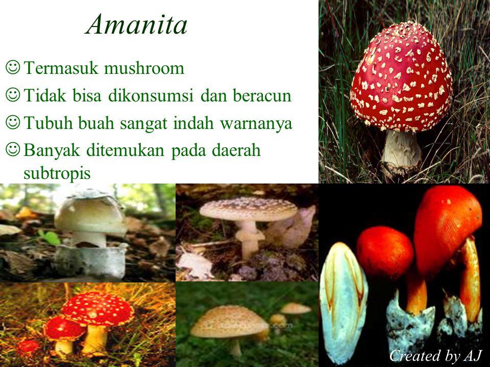 Amanita Termasuk mushroom Tidak bisa dikonsumsi dan beracun