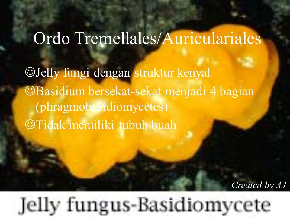 Ordo Tremellales/Auriculariales