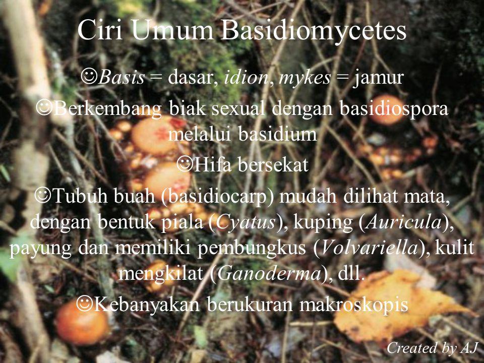 Ciri Umum Basidiomycetes