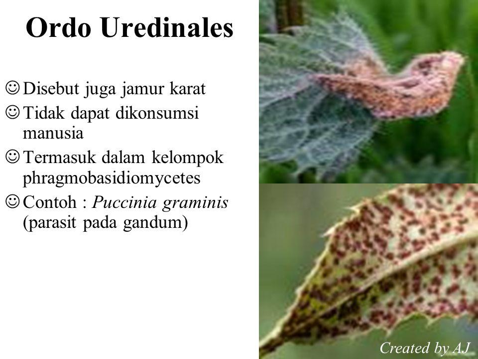 Ordo Uredinales Disebut juga jamur karat