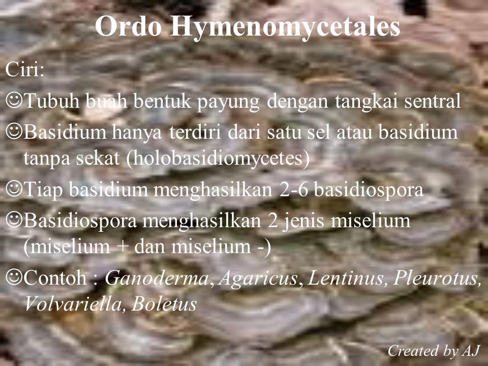 Ordo Hymenomycetales Ciri: