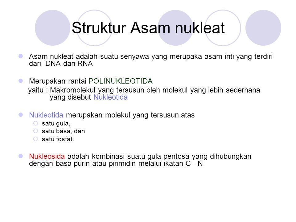 Struktur Asam nukleat Asam nukleat adalah suatu senyawa yang merupaka asam inti yang terdiri dari DNA dan RNA.