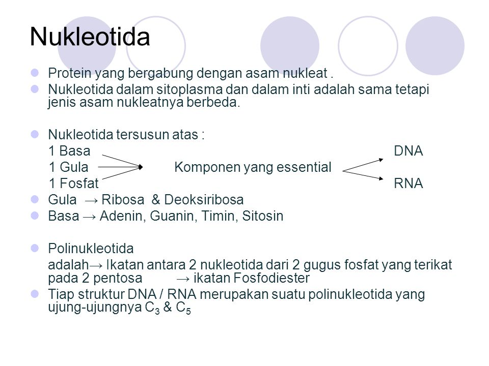 Nukleotida Protein yang bergabung dengan asam nukleat .