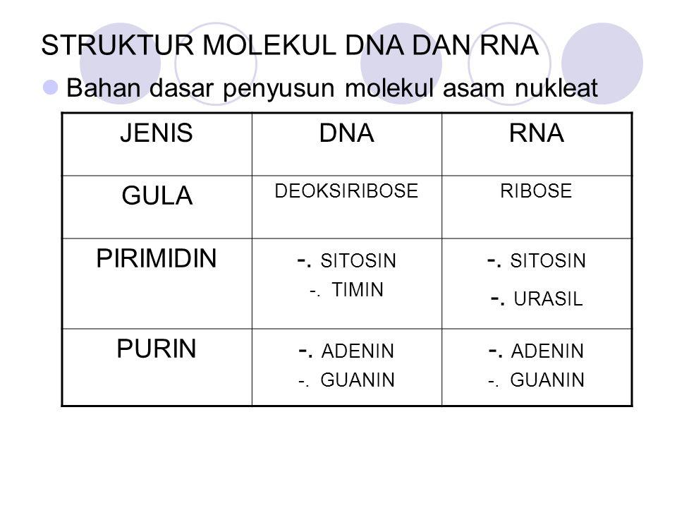 STRUKTUR MOLEKUL DNA DAN RNA