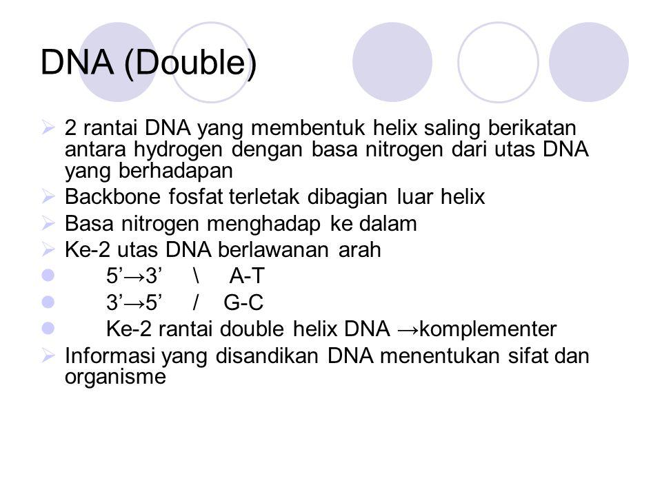 DNA (Double) 2 rantai DNA yang membentuk helix saling berikatan antara hydrogen dengan basa nitrogen dari utas DNA yang berhadapan.
