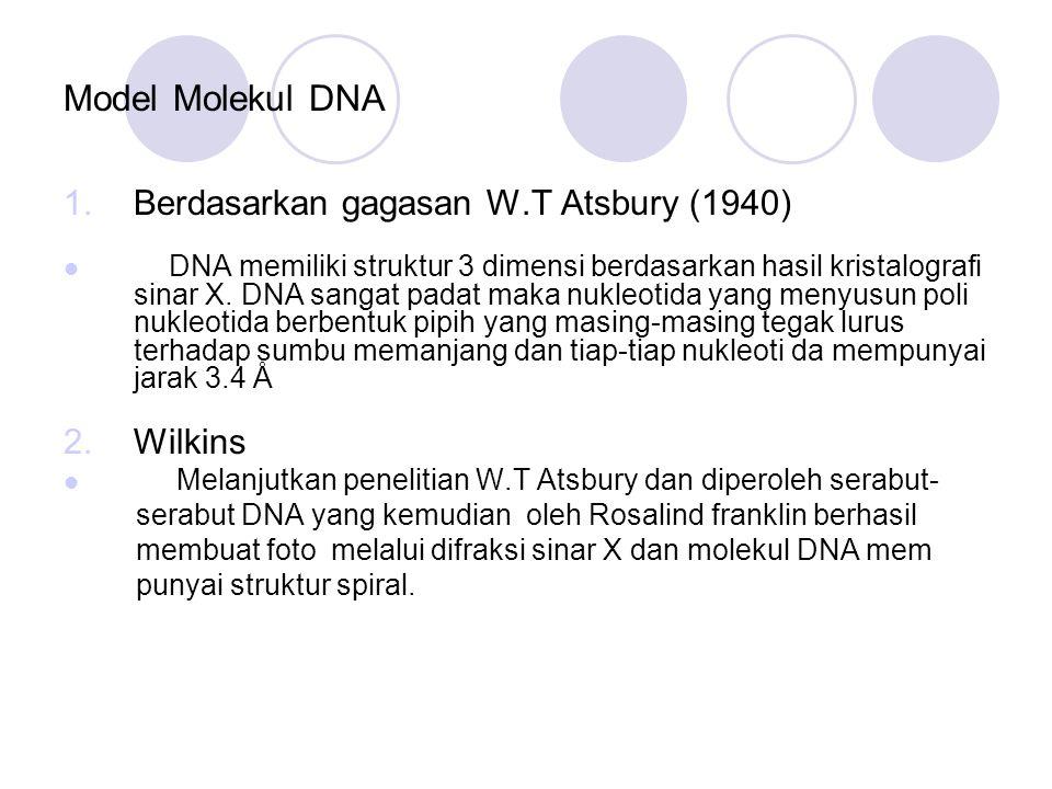 Model Molekul DNA Berdasarkan gagasan W.T Atsbury (1940) Wilkins