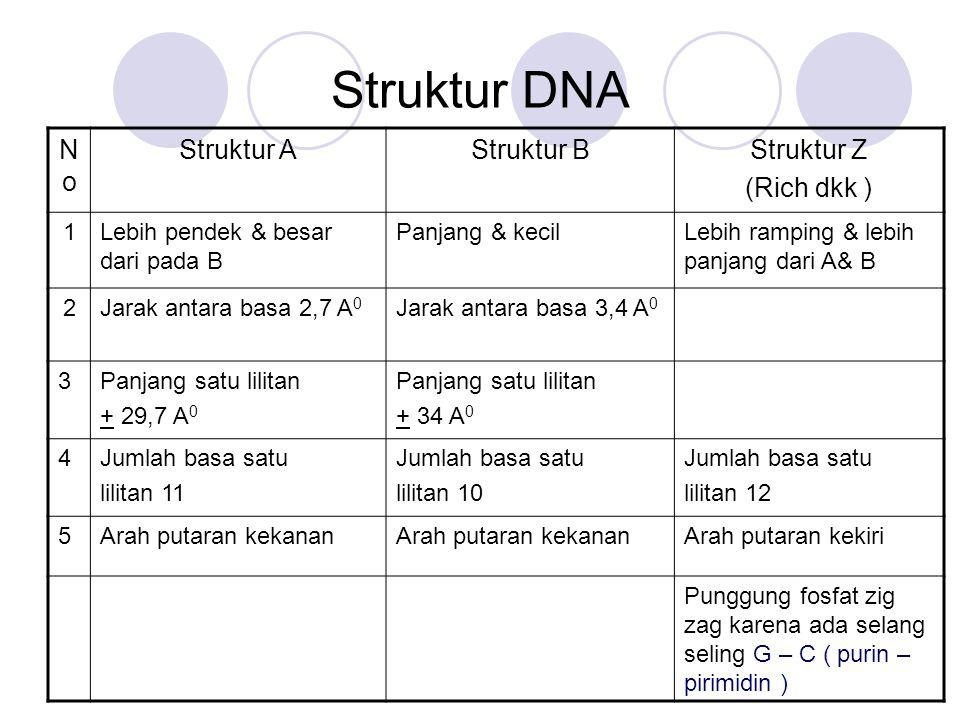 Struktur DNA No Struktur A Struktur B Struktur Z (Rich dkk ) 1