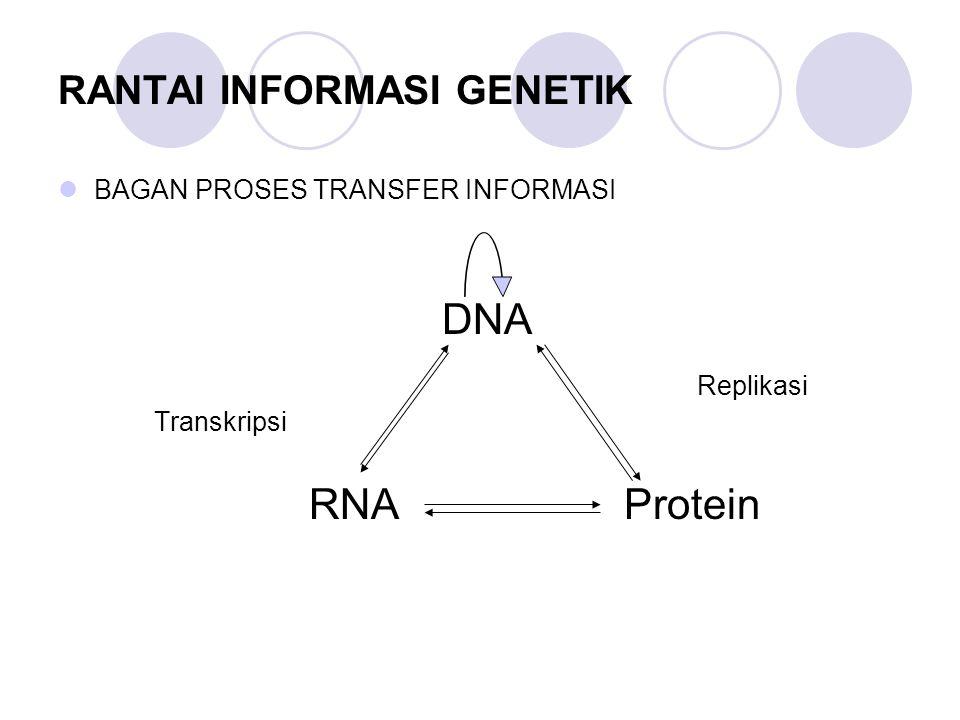 RANTAI INFORMASI GENETIK