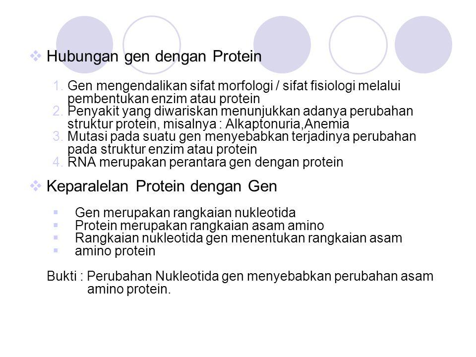 Hubungan gen dengan Protein
