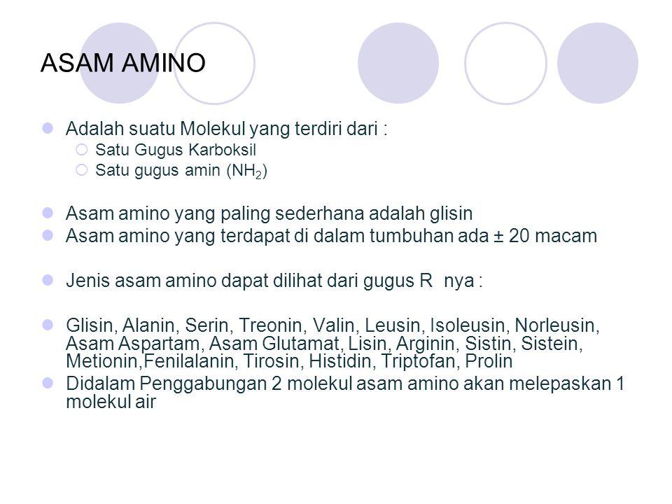 ASAM AMINO Adalah suatu Molekul yang terdiri dari :