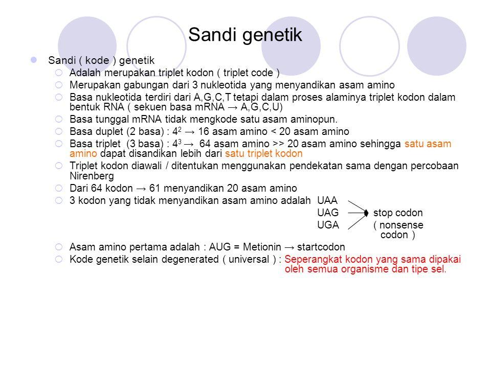 Sandi genetik Sandi ( kode ) genetik