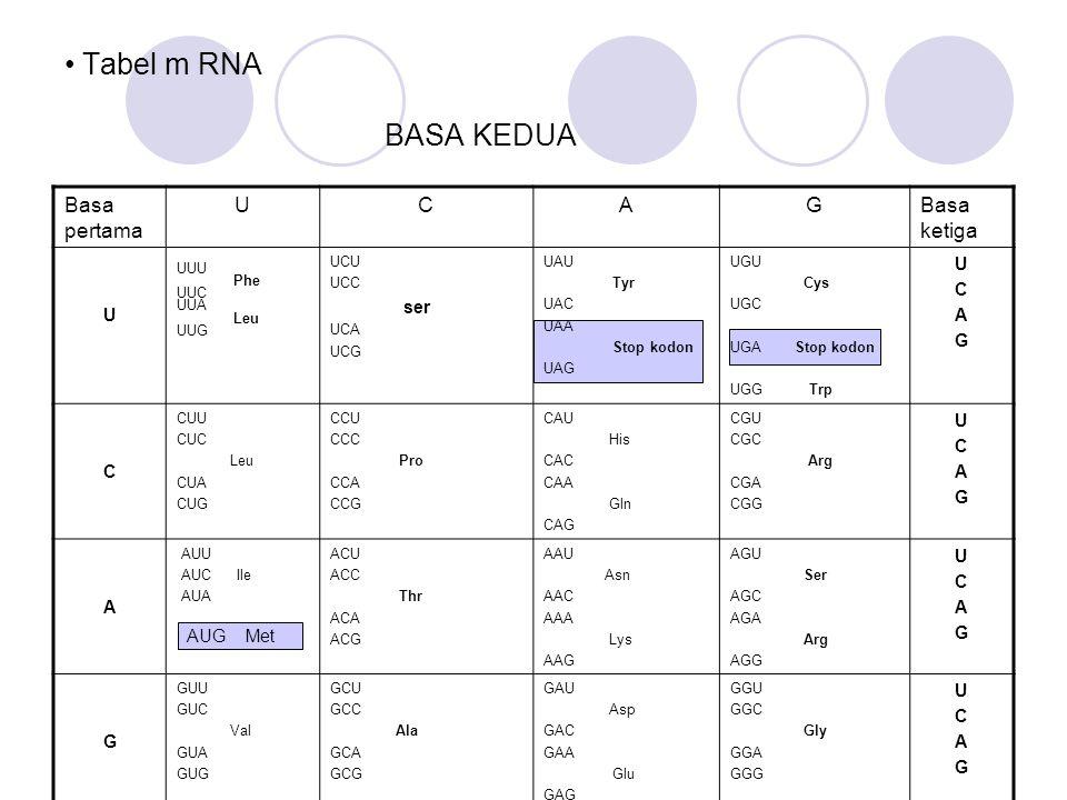 Tabel m RNA BASA KEDUA Basa pertama U C A G Basa ketiga AUG Met UUU