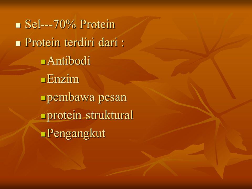 Sel---70% Protein Protein terdiri dari : Antibodi Enzim pembawa pesan protein struktural Pengangkut