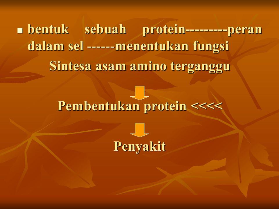 Sintesa asam amino terganggu Pembentukan protein <<<<