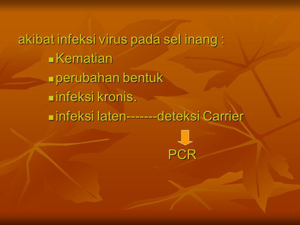 akibat infeksi virus pada sel inang :