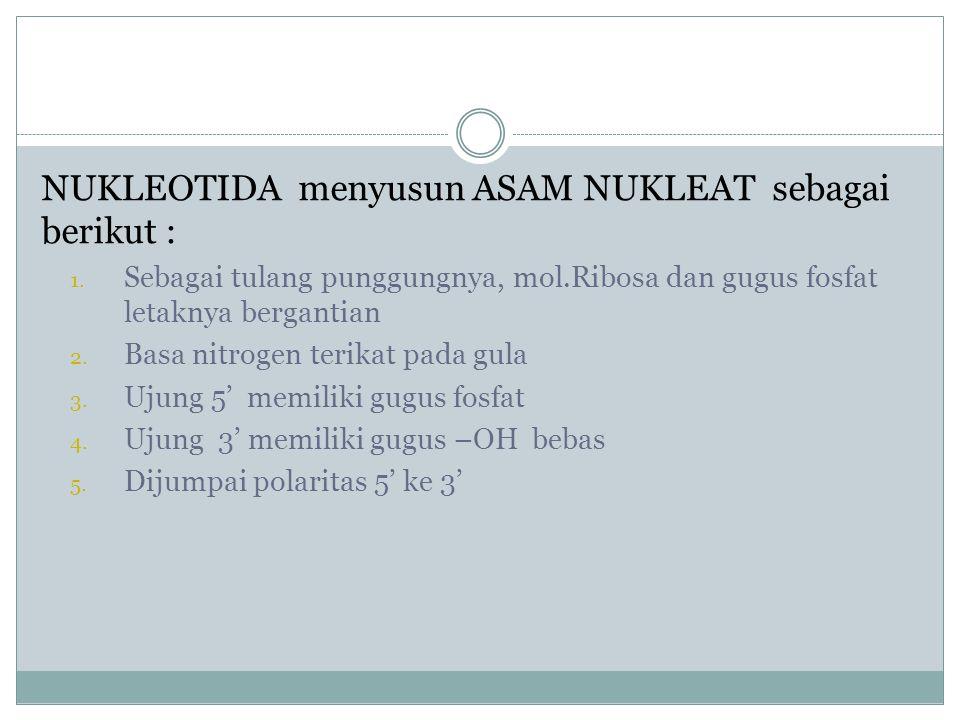 NUKLEOTIDA menyusun ASAM NUKLEAT sebagai berikut :