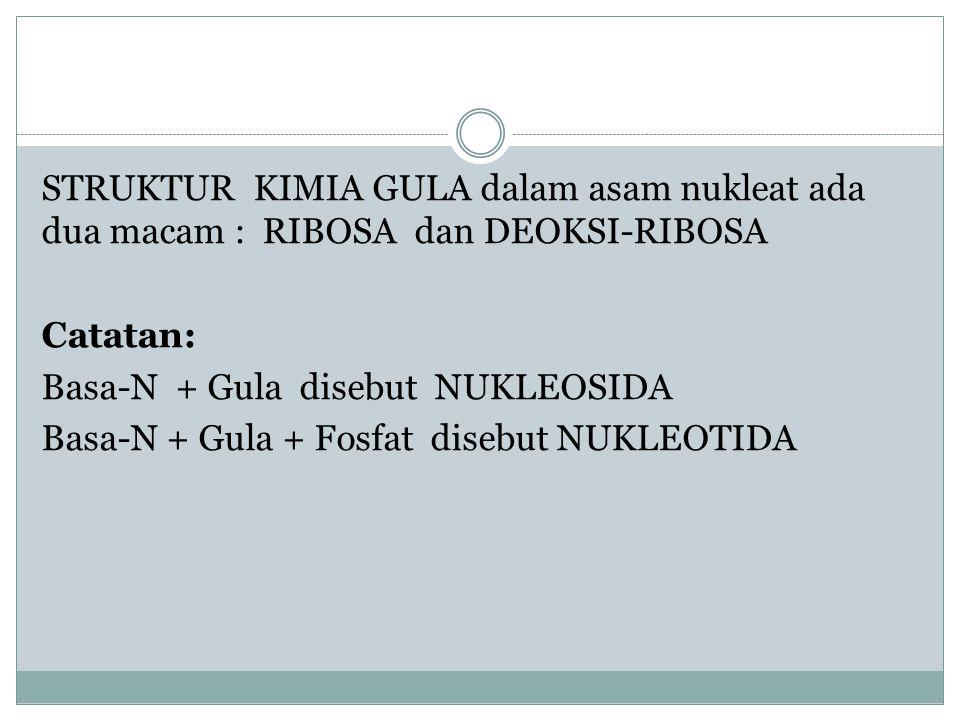 STRUKTUR KIMIA GULA dalam asam nukleat ada dua macam : RIBOSA dan DEOKSI-RIBOSA