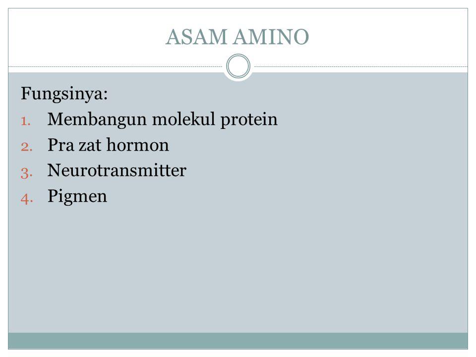ASAM AMINO Fungsinya: Membangun molekul protein Pra zat hormon