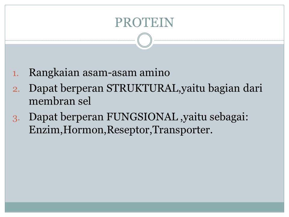 PROTEIN Rangkaian asam-asam amino