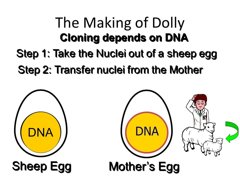 The Making of Dolly Empty DNA DNA Sheep Egg Mother's Egg