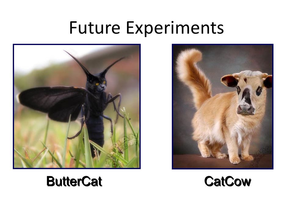 Future Experiments ButterCat CatCow