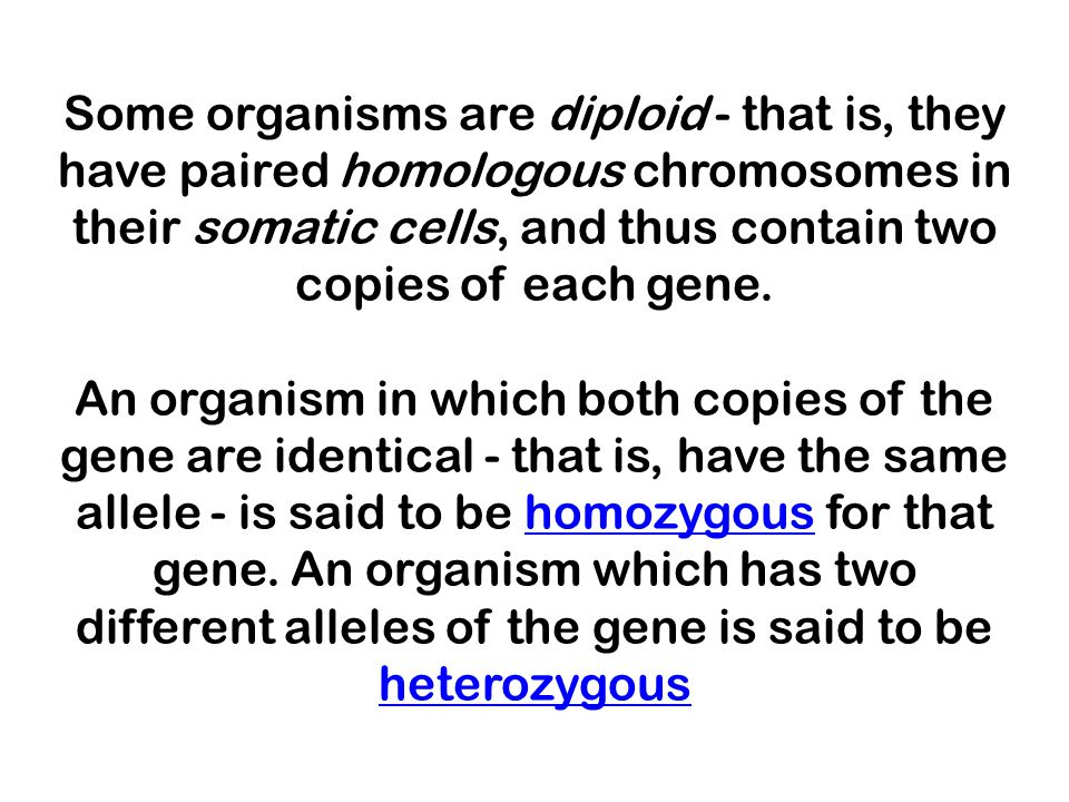 Some organisms are diploid - that is, they have paired homologous chromosomes in their somatic cells, and thus contain two copies of each gene.