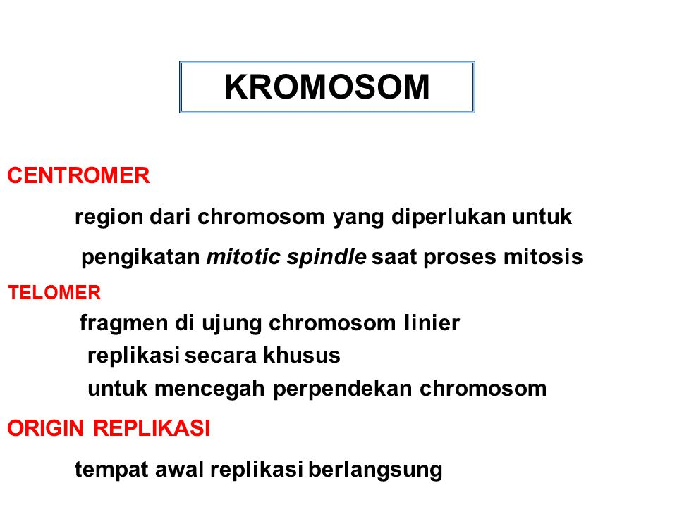 KROMOSOM CENTROMER pengikatan mitotic spindle saat proses mitosis