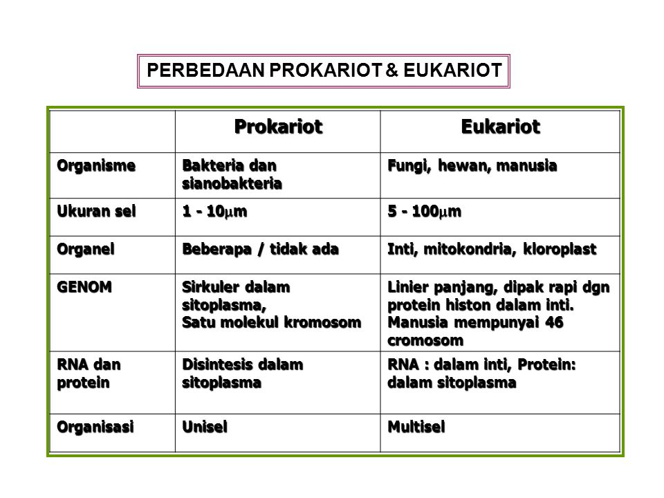 PERBEDAAN PROKARIOT & EUKARIOT