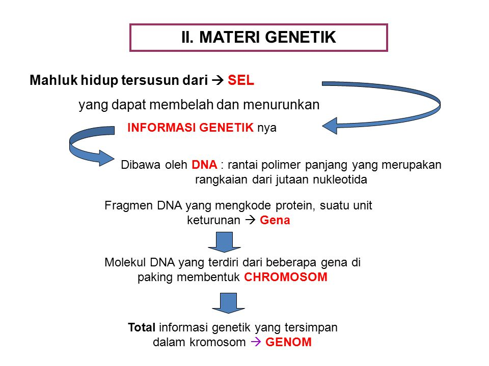 II. MATERI GENETIK Mahluk hidup tersusun dari  SEL