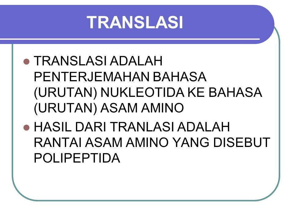 TRANSLASI TRANSLASI ADALAH PENTERJEMAHAN BAHASA (URUTAN) NUKLEOTIDA KE BAHASA (URUTAN) ASAM AMINO.