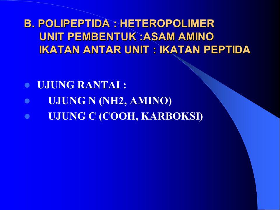 B. POLIPEPTIDA : HETEROPOLIMER UNIT PEMBENTUK :ASAM AMINO IKATAN ANTAR UNIT : IKATAN PEPTIDA