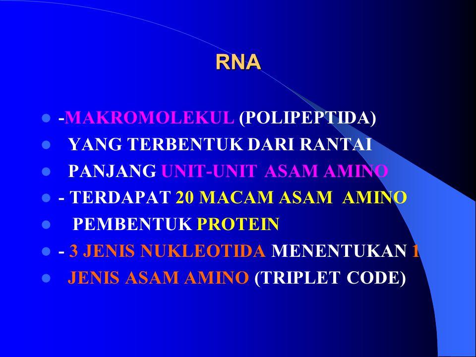 RNA -MAKROMOLEKUL (POLIPEPTIDA) YANG TERBENTUK DARI RANTAI