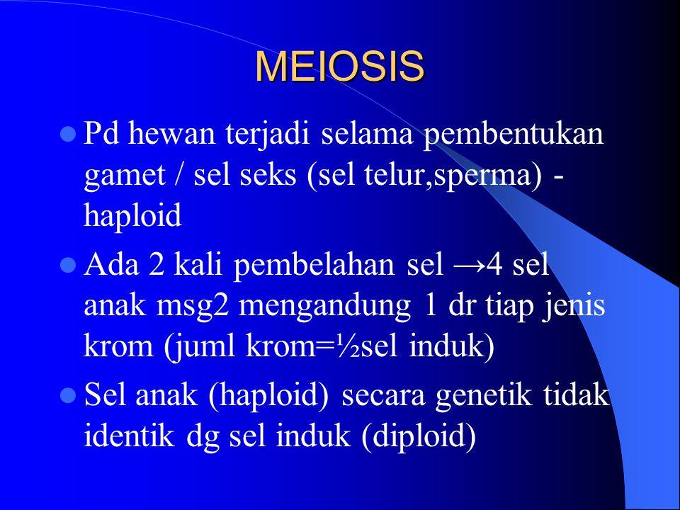 MEIOSIS Pd hewan terjadi selama pembentukan gamet / sel seks (sel telur,sperma) - haploid.