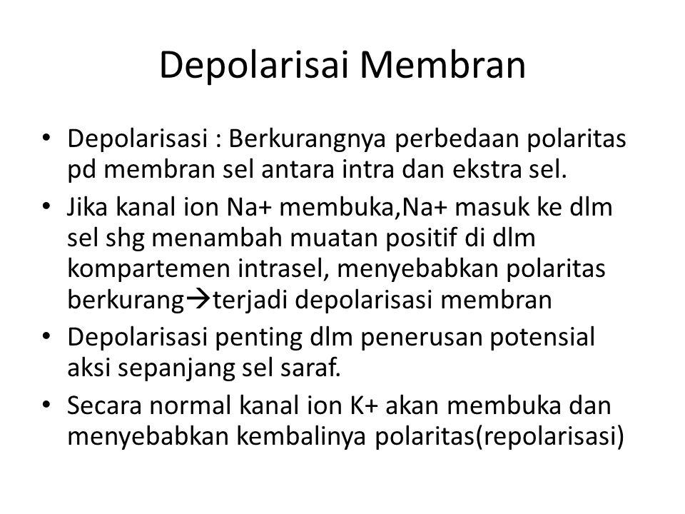 Depolarisai Membran Depolarisasi : Berkurangnya perbedaan polaritas pd membran sel antara intra dan ekstra sel.