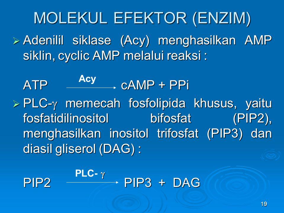MOLEKUL EFEKTOR (ENZIM)