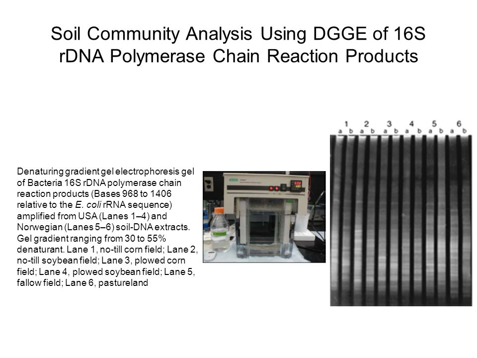 Soil Community Analysis Using DGGE of 16S rDNA Polymerase Chain Reaction Products