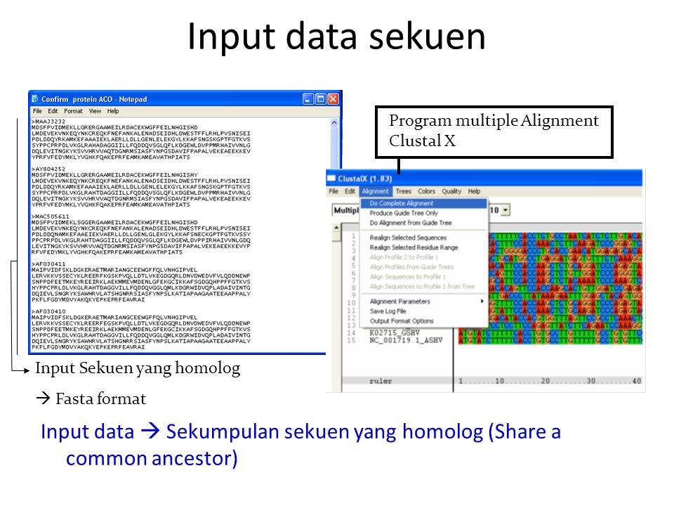 Input data sekuen Program multiple Alignment Clustal X. Input Sekuen yang homolog.  Fasta format.
