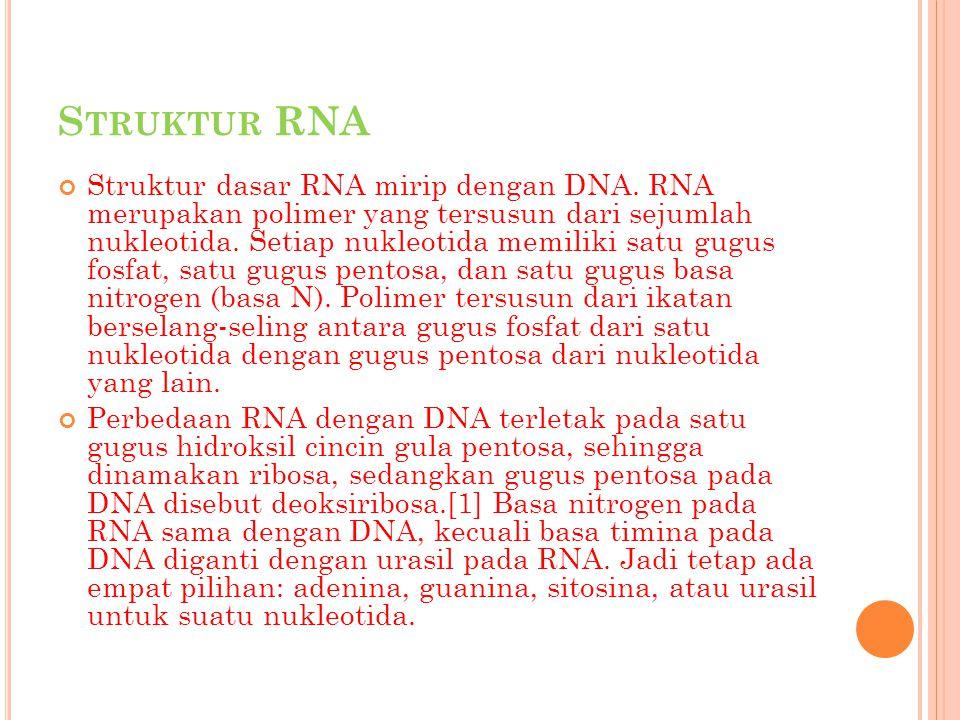 Struktur RNA