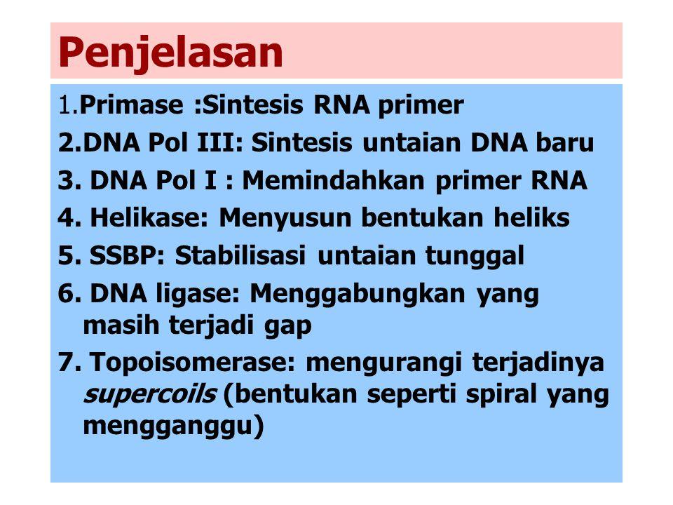Penjelasan 1.Primase :Sintesis RNA primer