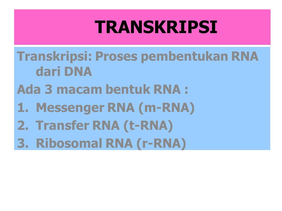 TRANSKRIPSI Transkripsi: Proses pembentukan RNA dari DNA