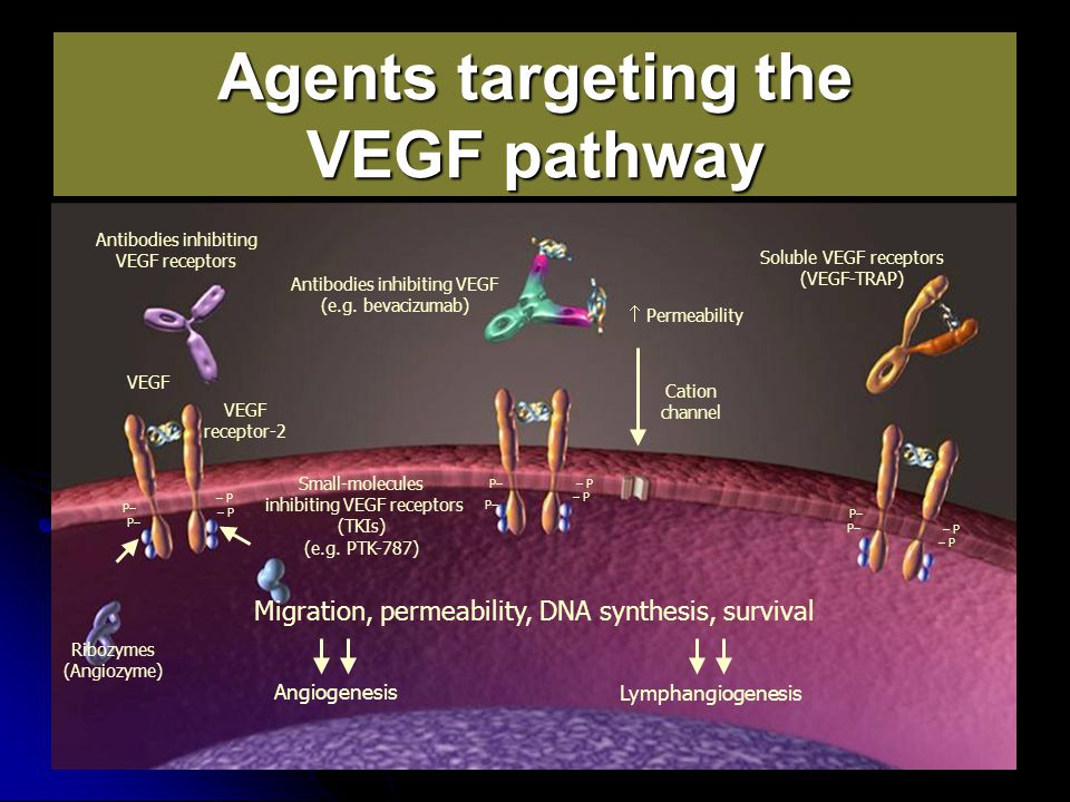 Agents targeting the VEGF pathway